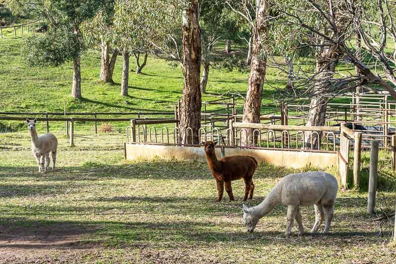 QUIET PICTURESQUE – PARIS CREEK - farm animals